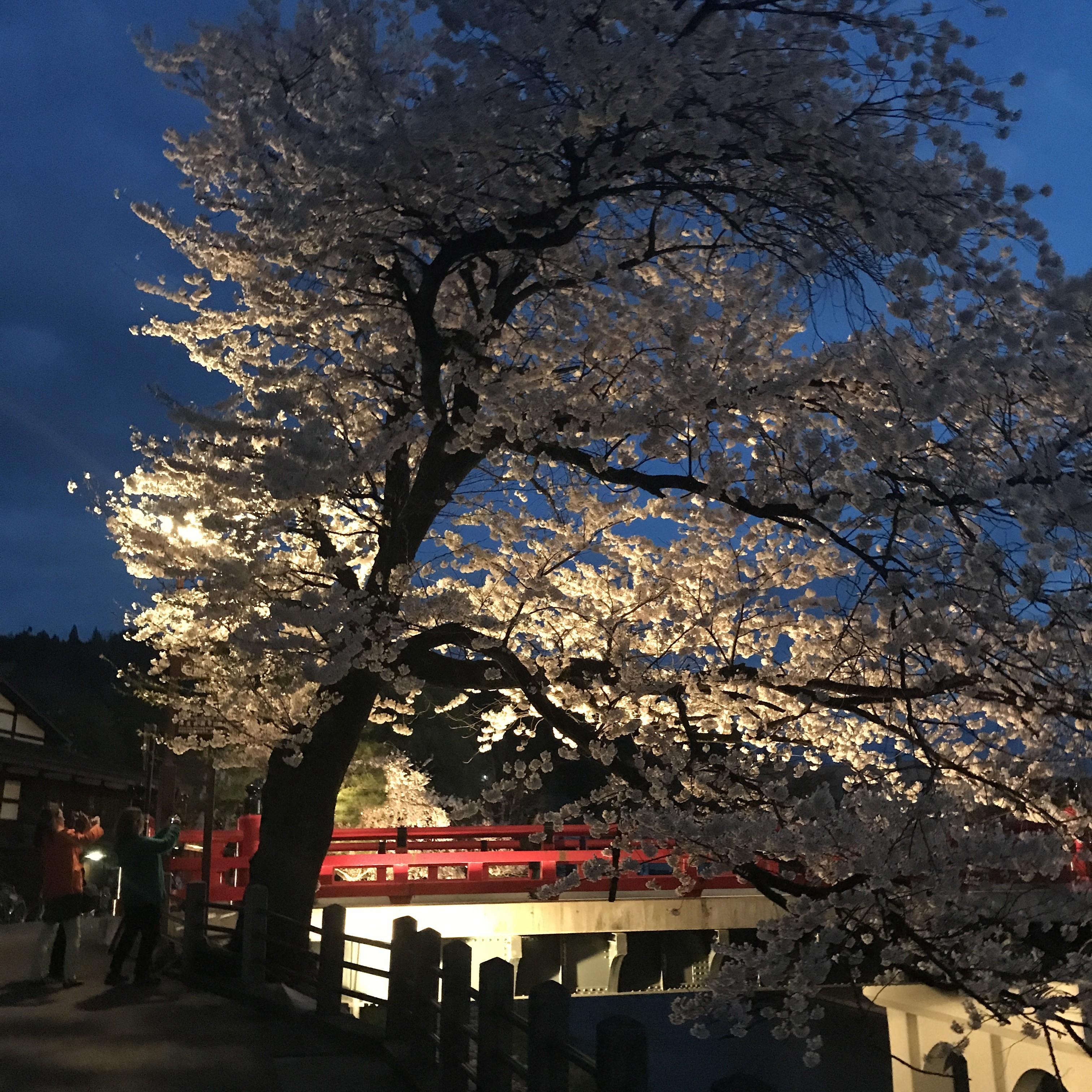 飛騨高山 中橋 夜景 夜桜 絶景