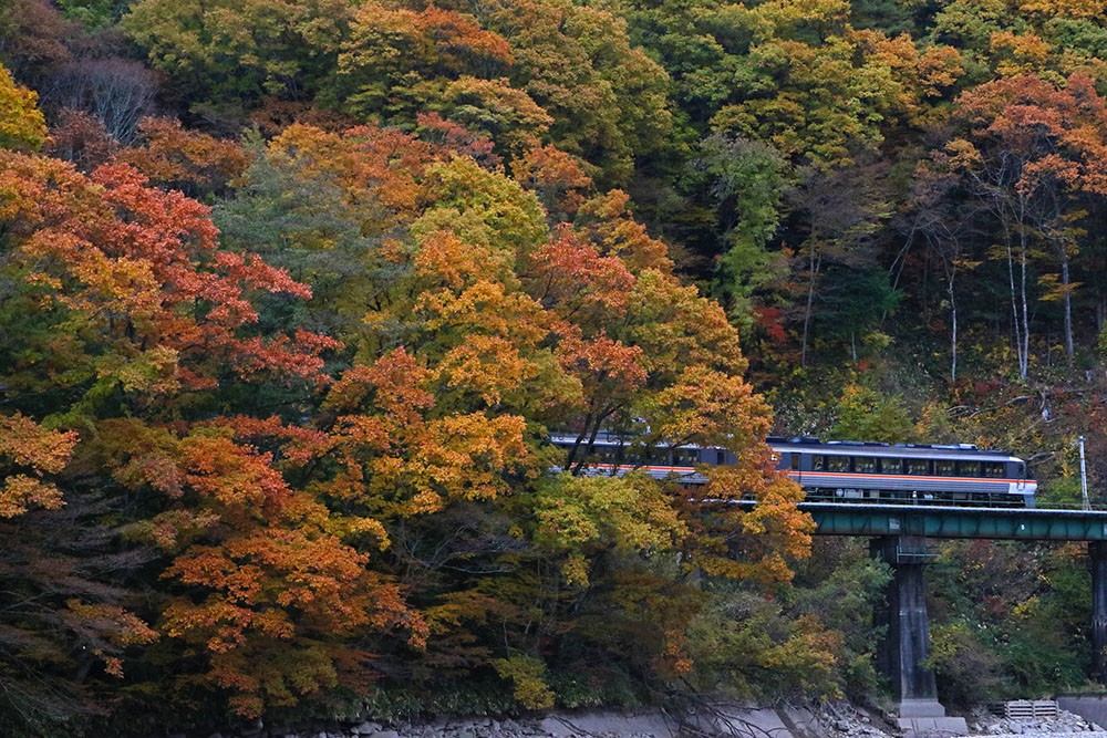 紅葉と高山本線