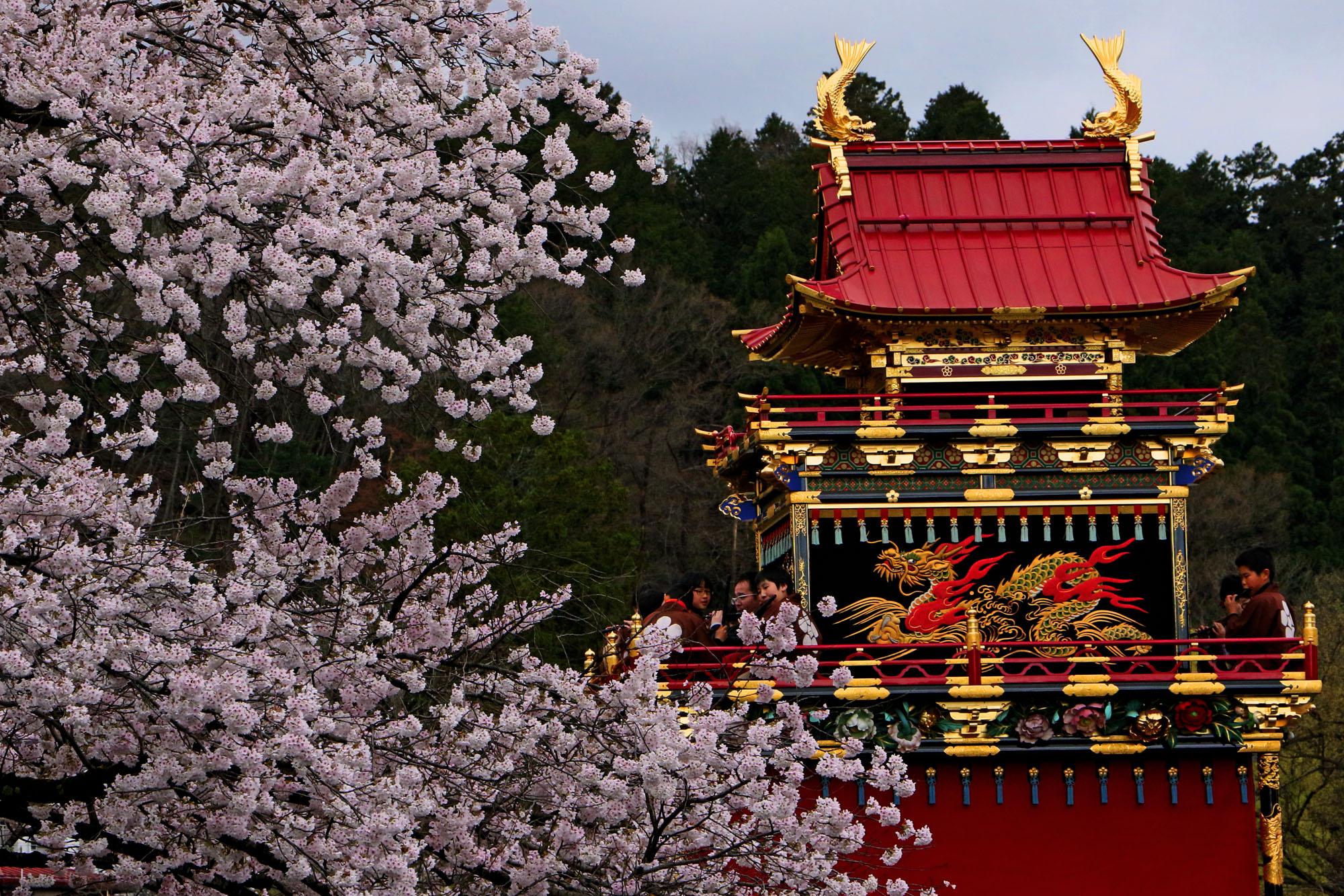 高山祭青龍台と桜