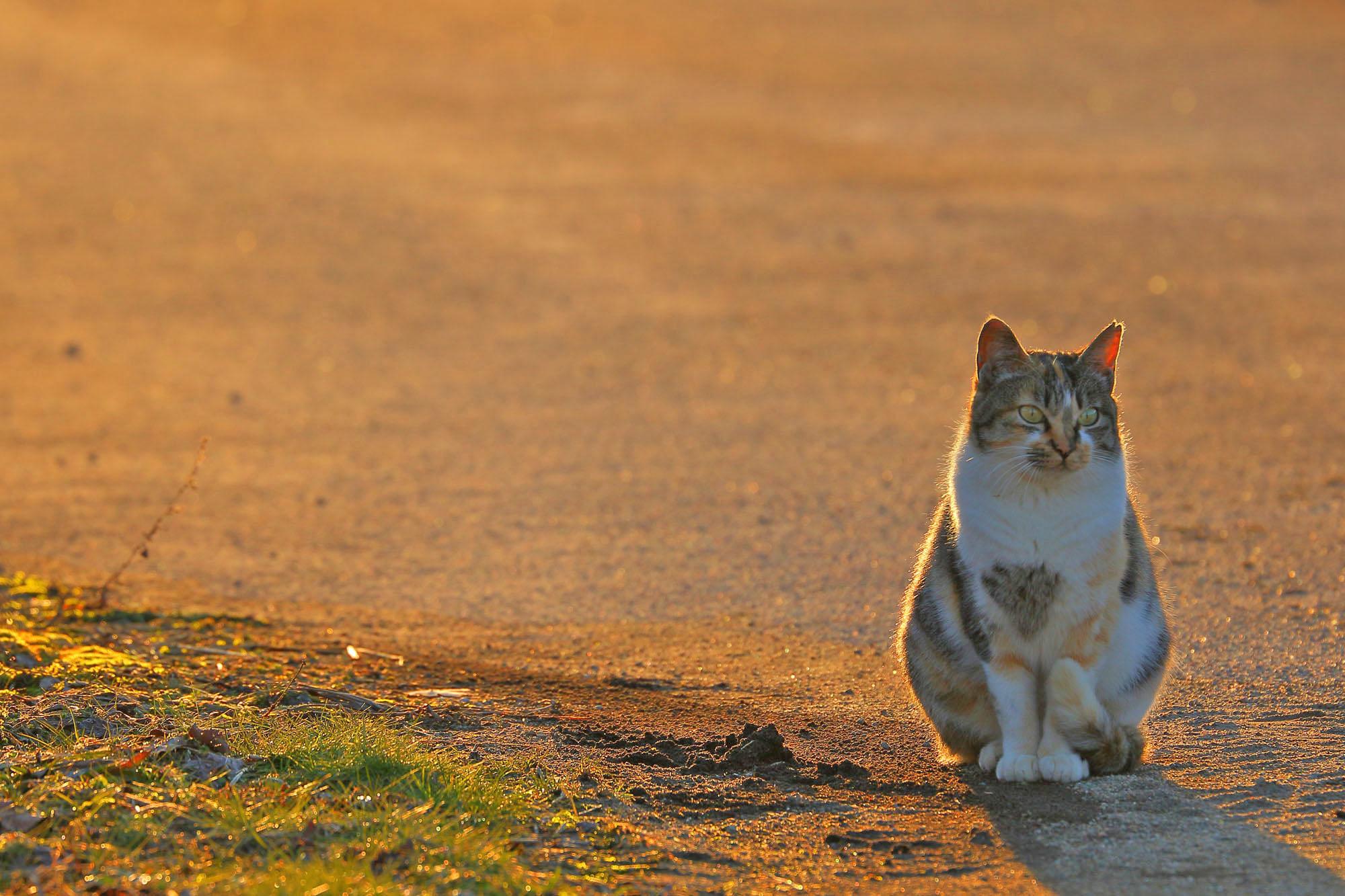 夕方、撮り鉄中にやってきた猫ちゃん♪