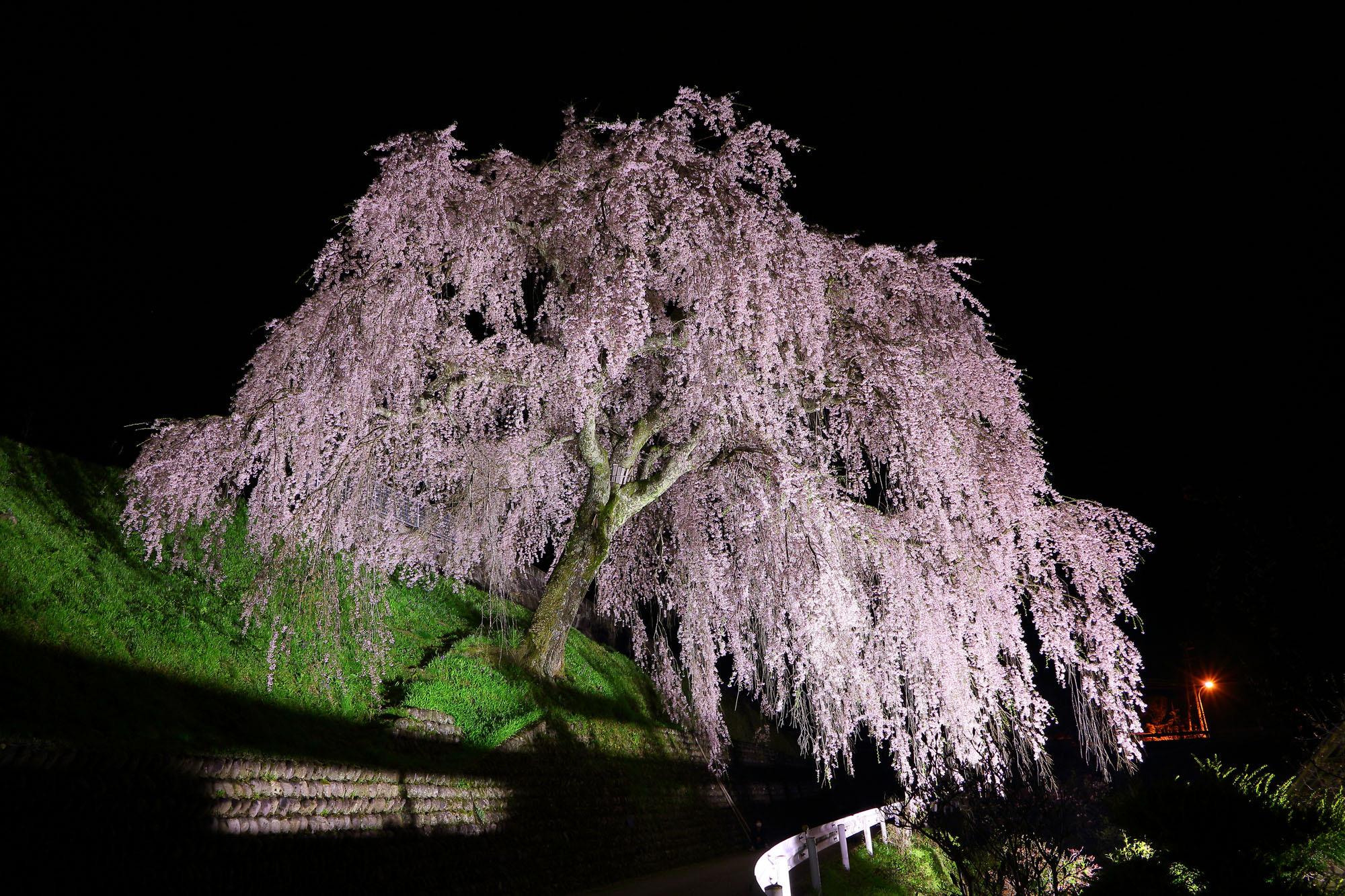 飛騨萩原にある岩太郎のしだれ桜